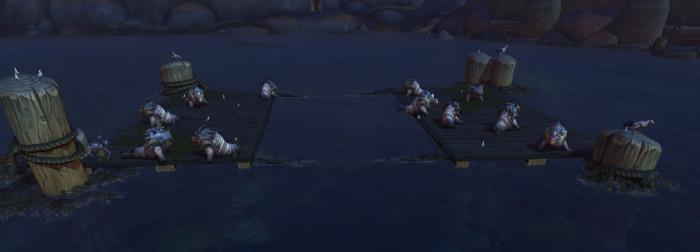 De nombreux phoques sont sur les pontons.